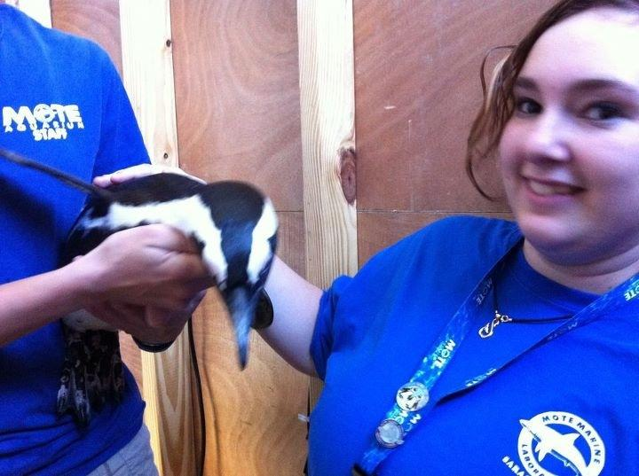 Sophomore Nikki Cronen enjoys educating the public on the lives of the penguins, especially Rudy.