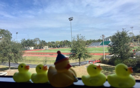 """Photo of the Day: """"Mystery"""" ducks appear all over campus"""