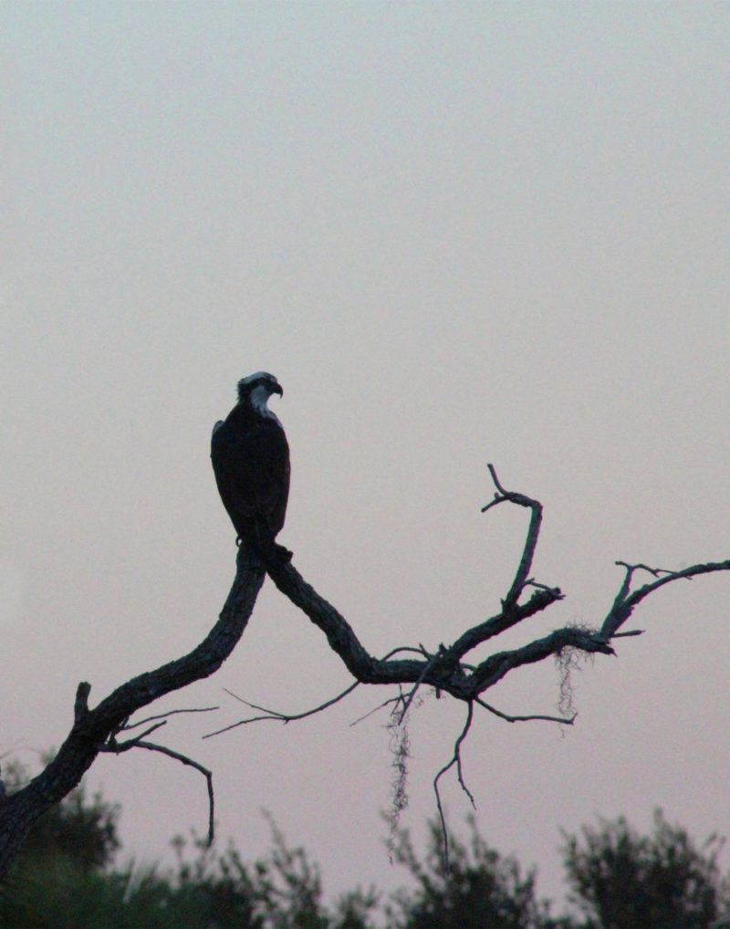 A+bird+perched+on+a+tree+is+looking+into+the+gloomy+sky.